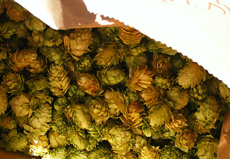 A Grocery Bag Full of Homegrown Cascade Hops