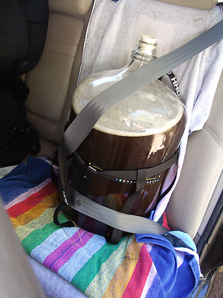 Wort All Buckled In