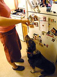 Dog Eating Fake Bacon