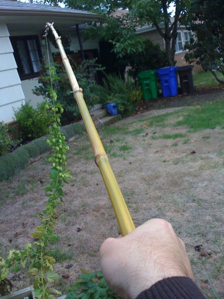 Taking Down the Bamboo Hops Trellis